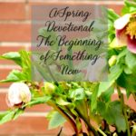 A Spring Devotional:The Beginning of Something New